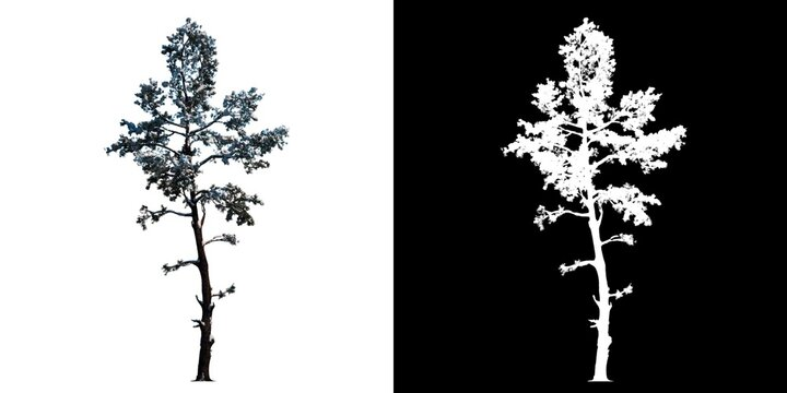 Front view of Tree (Snowy Tree Winter 6) Plant png with alpha channel to cutout made with 3D render