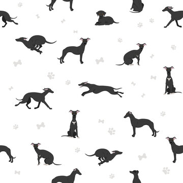 Whippet seamless pattern.  Different poses, coat colors set.
