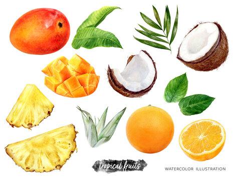 Pineapple orange mango coconut set watercolor illustration isolated on white background