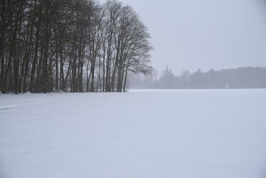 Heavy snowfall on the field near the forest.