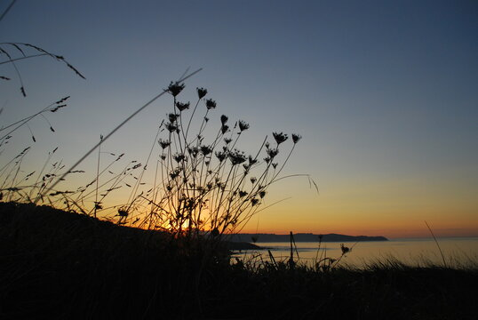 Silhouette Plant On Beach Against Sky During Sunset