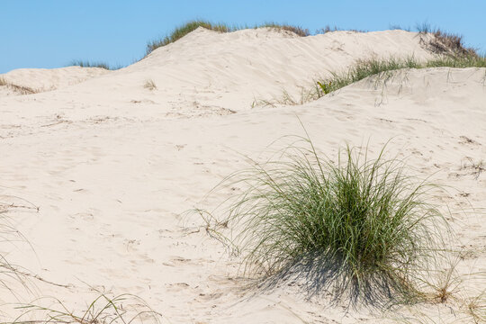Vegetation and dunes