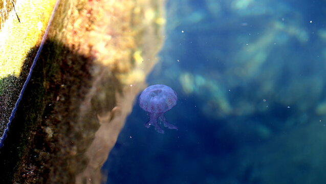 Jelly Fish Beneath Surface Of Water