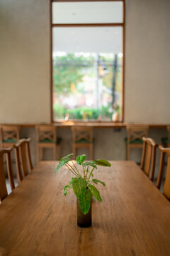 decorative plants in vases on long wooden table