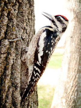 Side view of yellow bellied sapsucker perching on tree during sunny day