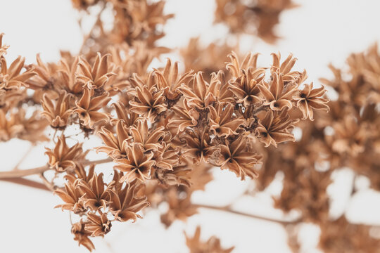 Little brown bell shape romantic flowers lovely dry branch on light background macro