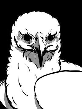 white eagle head art sketch style illustration black background