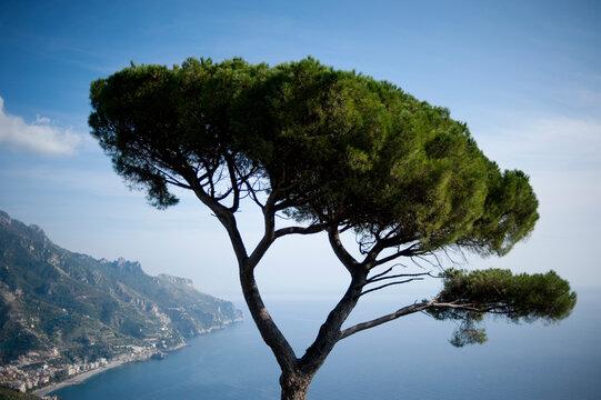 Tree overlooking sea against sky