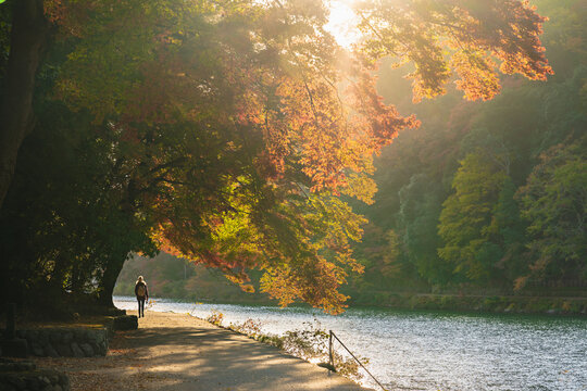 One women walk by the river of Arashiyama autumn in Kyoto, Japan. with high resolution files.