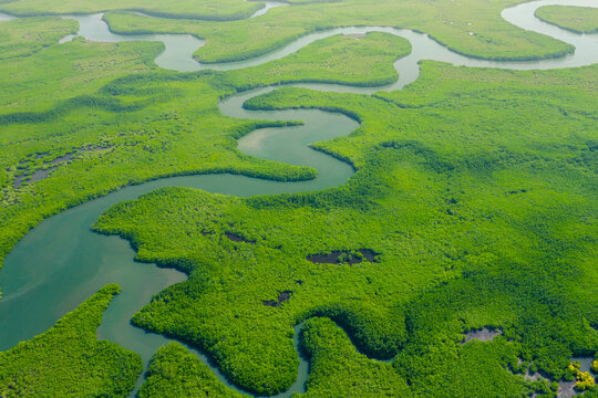 Aerial View of Green Mangrove Forest. Nature Landscape. Tropical Rainforest.