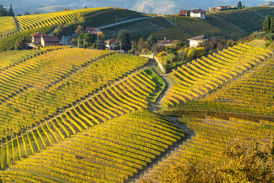 Scenic road on a hill among the vineyards of Langhe area near Serralunga d'Alba, Piedmont, Italy