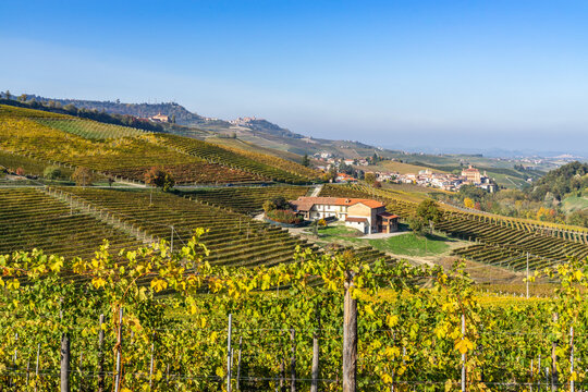 Landscape with vineyards near Barolo during fall season, Piedmont region, Italy