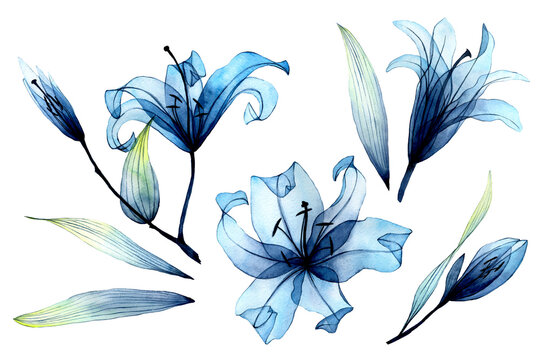 watercolor set with transparent flowers and leaves. transparent blue lilies in pastel colors. elements isolated on white background. design for wedding