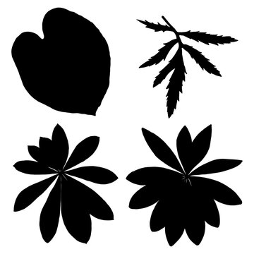 Leaf silhouette collection, foliage set. Domestic spring leaves, botanical illustration of hand drawing elements made of real live forest and home plants. Vector.
