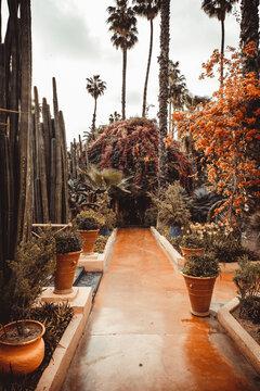 Detail of Majorelle Gardens in Marrakech