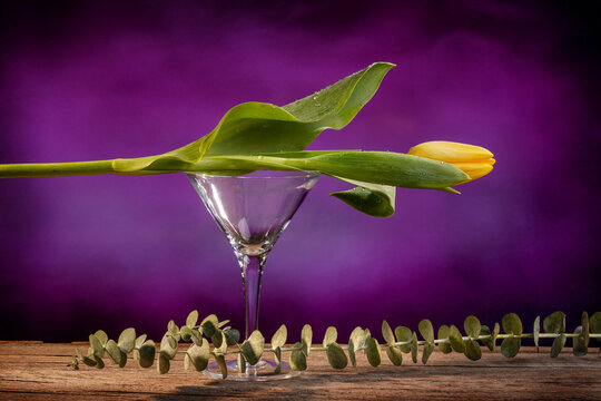 Still life of a closed yellow tulip placed on an empty martini glass on a barn wood table with a eucalyptus stem and a purple backdrop