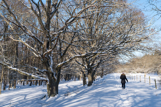 Active woman walking in a snowy forest