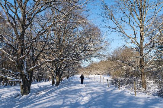 Walking in a winter landscape