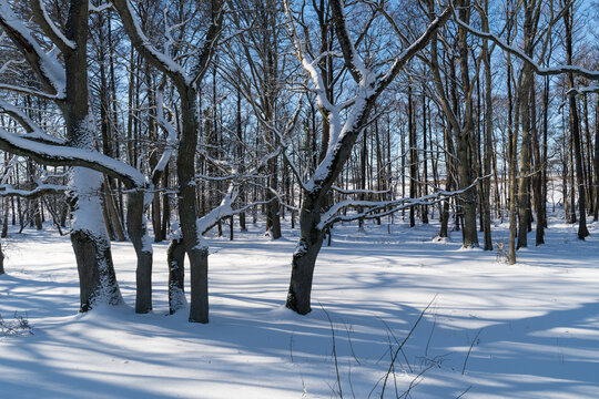 Bright winterland in a forest