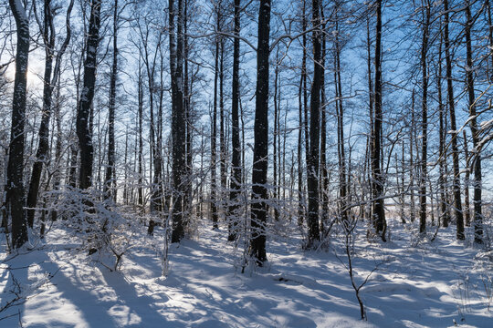 Bright snowy forest