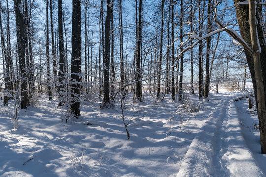 Trail through a forest in winter season