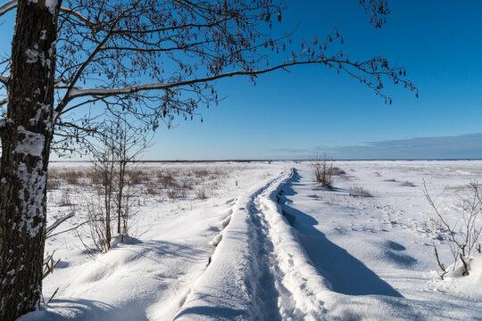 Trail in a frozen wetland