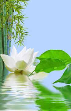 Composition aquatique zen, bambou, ficus et fleur blanche de lotus