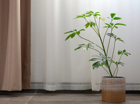 Green plant in front of curtains