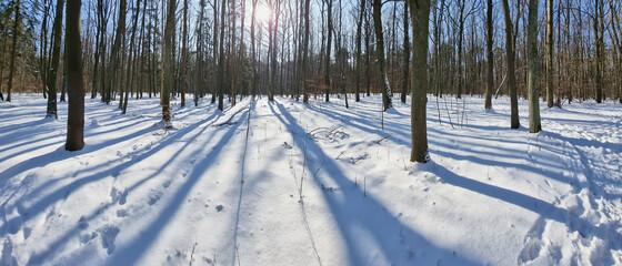 Panorama lasu w piękny słoneczny dzień zimą