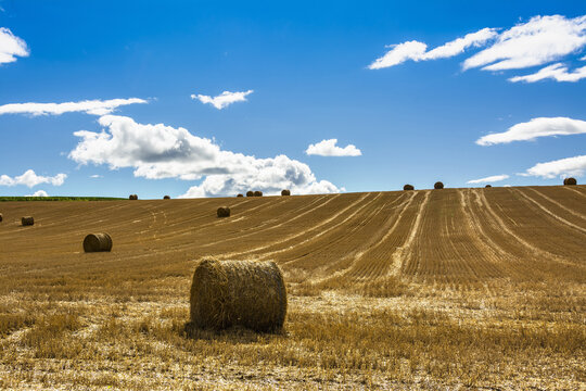 Harvested field with straw bales in Puy-de-Dome department, Auvergne-Rhone-Alpes, France