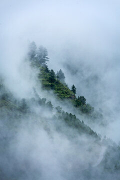 Trees in clouds