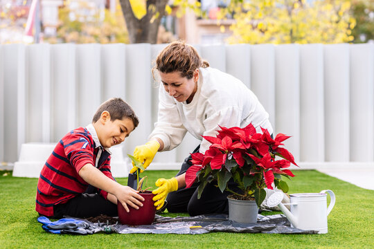 Mother and son in garden planting  flowers..