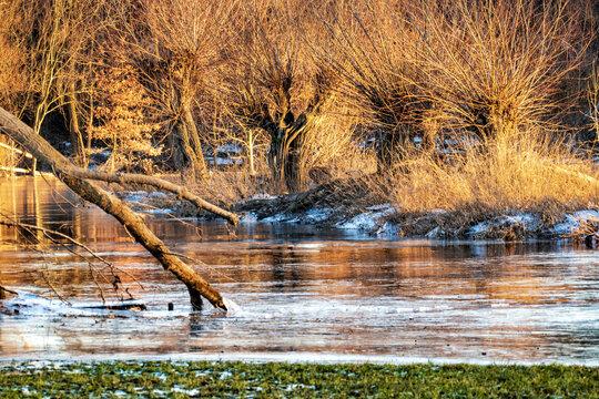 Kopfweiden im Abendlicht im Eis der zugefrorenen Überflutungsfläche der Siegaue