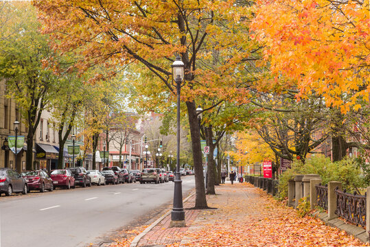 Canada, Central New Brunswick, Fredericton. Queen Street in autumn.