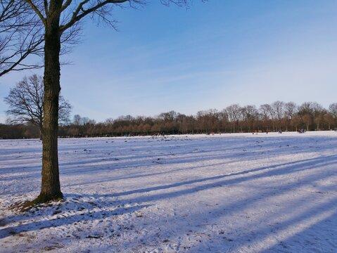 Schneefeld im Hamburger Stadtpark