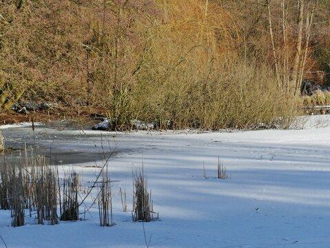 Zugefrorener Teich im Stadtpark Hamburg