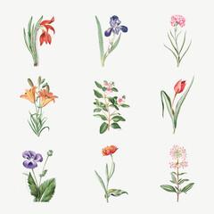 Set of blooming flowers vector