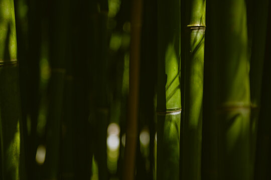 Green bamboo in the forest. Macro image, selective focus. Blurred nature background.