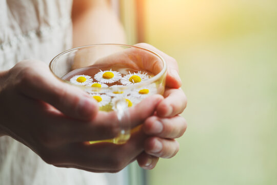 female hands holding cup of herbal tea with chamomile flowers