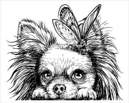 Chihuahua dog with a butterfly. Wall sticker. Graphic, black-and-white, sketch portrait of a Chihuahua dog on a white background. Digital drawing