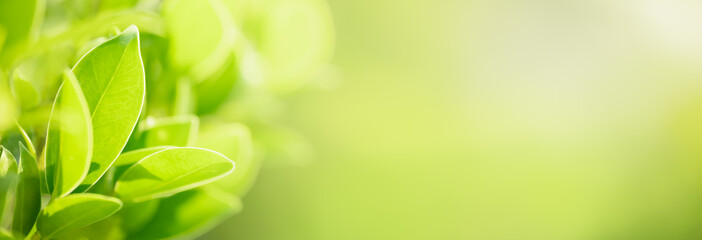 Closeup of green nature leaf on blurred greenery background in garden with bokeh and copy space using as background cover page concept. - fototapety na wymiar
