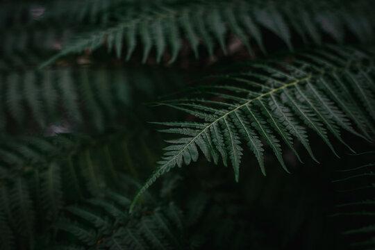 Close up fern photo dark tone