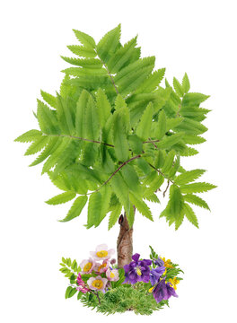 Symbol  of Spring tree  made from flowers isolated