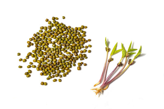 Close-up of mash microgreens and seeds isolated on white background. Vegan and healthy eating concept. Sprouted mash germinated from high quality organic plant seed.