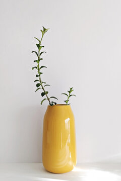 Modern Illuminating yellow vase with plant on white wall