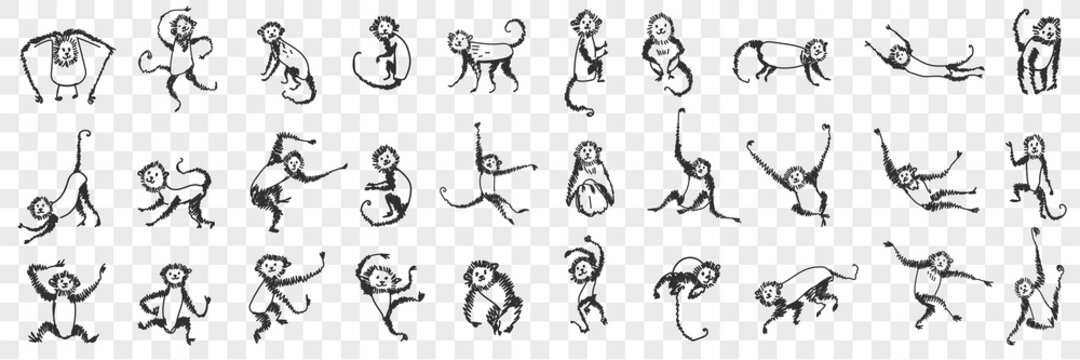 Monkeys enjoying life doodle set. Collection of hand drawn monkey animals primate playing hanging on branches and trees eating sleeping feeling happy for children isolated on transparent background