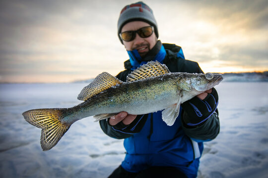 Trophy zander. Ice fishing background.