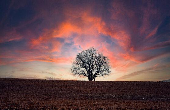 Dramatischer Himmel mit Baum