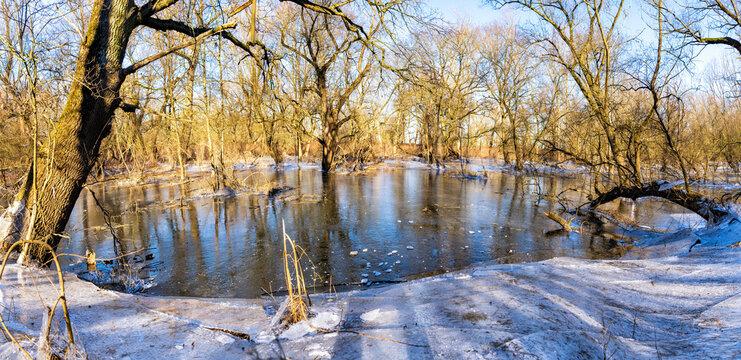 Winterlicher Auwald mit gefrorenem Hochwasser: Siegaue bei Bonn