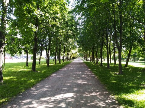 Long straight alley in the park in the sun and shade. The sandy road of the alley goes into the distance, under a light blue sky. Green trees, grass, bushes grow along the edges of the alley. The sun